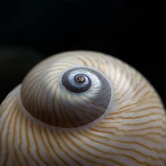 Moon Shell Carol Leigh
