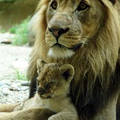 <3 father & baby <3