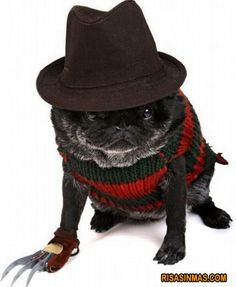 Un disfraz para tu perro DE HALOWEEN...