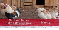 Dance Like a Chicken Day on May encourages everyone to dance like a chicken! Flap your arms, strut your stuff. Dance like a chicken! National Days, National Holidays, Duck Costumes, Wacky Holidays, National Day Calendar, Golf Day, Food Drive, Miniature Golf, Holiday Calendar