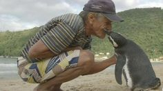 A Patagonian penguin returns to an island off Rio de Janeiro every year to visit the man who saved him five years ago.
