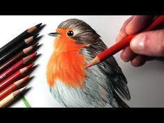 How to draw a bird -- Prismacolor colored pencils. - YouTube