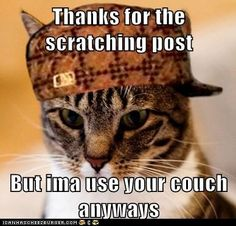 All of mine thanked me for the many scratching posts, then giggled and smirked as they strutted off.