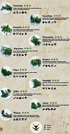 Újrahasznosítva: ükunokáidnak is lesz hol élniük! Easy Cooking, Cooking Tips, Becoming A Chef, Good Food, Yummy Food, Medicinal Plants, Vegan Recipes Easy, No Cook Meals, Healthy Tips