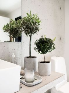 Des plantes vertes