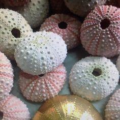 siamo amanti del #mare e della #natura a loro ci ispiriamo per le nostre #creazioni #inspiration #gold #urchin #seaurchin #riccio #ricci #salento #white #pink #lovegold #jewels by anchacajewelry