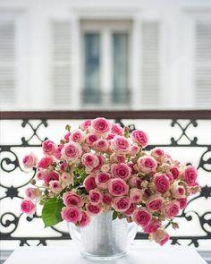 roses on a Paris balcony (disorganized)