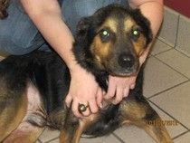 Bruno survived severe neglect and still has a loving heart. Needs an amazing home!