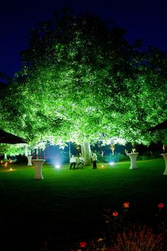 Great example of uplighting a tree. So simple but so elegant.
