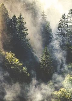 Clouds at the tip top of the forrest. Gorgeous mountain shot via Tumblr. Painting idea.