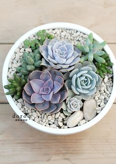 Simple, effective potted succulent arrangement. I miss my succulent; night need to get a new one :3