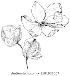 Similar Images, Stock Photos & Vectors of Magnolia in a vector style isolated. Full name of the plant: magnolia. Vector flower for background, texture, wrapper pattern, frame or border. Stencil Designs, Designs To Draw, Paper Flowers, Drawing Flowers, Beautiful Flowers Garden, Vector Flowers, Watercolor Paintings, Watercolors, Art Drawings