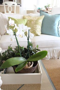 Favorite Posts from 2015- January-March - Starfish Cottage