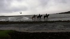 January They don't call it the Wild Atlantic Way for nothing. Just a soft day at the beach. Sierra, Reggie and All That Jazz ridden by three 15 y. Beach Rides, Atlantic Beach, Horses For Sale, Show Jumping, Cob, Jazz, Irish, Hunting, Ocean