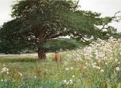 August Thistles and Oak, Paul Lewin 2004 Mixed Media (This is a painting! Landscape Drawings, Landscape Paintings, Grave Of The Fireflies, Oak Tree Tattoo, Tree Identification, Castle In The Sky, Tree Leaves, Paintings I Love, Tree Art