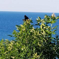 So much to appreciate along the shore of Lake Michigan! #GodisGood