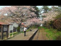 桜吹雪の津軽鉄道 前面展望(津軽五所川原-津軽中里) 2015-4-27 - YouTube