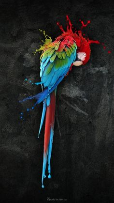 Parrot HD Wallpapers Desktop Pictures One HD Wallpaper Pictures Parrot Wallpaper, Parrot Tattoo, Parrot Painting, Free Iphone Wallpaper, Mobile Wallpaper, Iphone Wallpapers, Colorful Parrots, Pop Art, Colorful Paintings