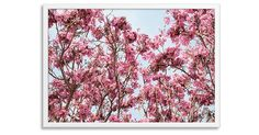 Claudia Lucia, Pink Trumpet Tree | One Kings Lane