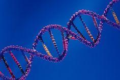 Attrazione Sessuale Genetica