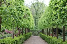 Here you can see a formally planted path with box hedging bursting into new bright green life and the hornbeams are just leafing so wonderfully fresh and green Green Garden, Lawn And Garden, Formal Gardens, Outdoor Gardens, Landscape Design, Garden Design, Greenhouse Gardening, Garden Gates, Hedges