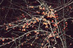 Dark flowers.