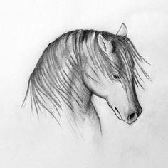 study to horse head 2