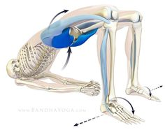 Hello Friends, In this post we take a look at the glute max in backbends and how to avoid splaying out your knees in the pose. I give yo...