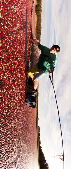 10000 cranberries for 10000 fans. #redbull #givesyouwings #video OH MY GAWD LOVE IT!