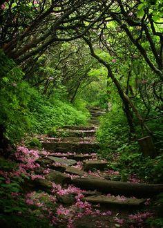 Craggy Gardens, Blue Ridge Parkway, North Carolina  photo via igor