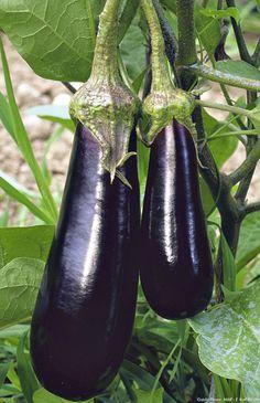 Voici une sélection de variétés de légumes qui n'ont pas besoin de traitement, idéal dans un potager bio.