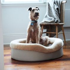 For Dogs Who Deserve The Best (@frankandarlo) • Instagram photos and videos Designer Dog Beds, Sheep Wool, Dapper, Memory Foam, The Best, Your Pet, Bean Bag Chair, Good Things, Luxury