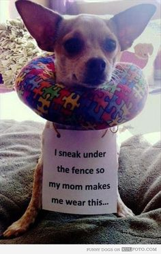 """I sneak under the fence..."