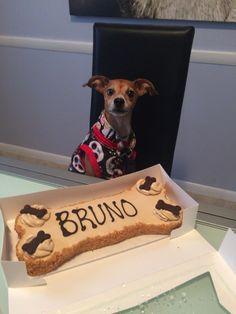 Dog party, three dog bakery, Gotcha day