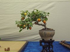 Bonsai Fruit Tree, Fruit Trees, Planter Pots, Painting, Art, Painting Art, Paintings, Painted Canvas, Drawings