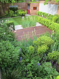 Planting combinations - Astrantia 'Large White'. Euphorbia x martini. Salvia x sylvestris 'May Night'. Sedum Matrona. Veronicastrum 'Apollo'. Geranium 'White Ness' Buxus Clipped box cube As featured on ITV Love Your Garden