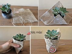 This is a small gift that we gave to the boy teacher. This is a very … # 那 是 小 礼物 给 的 的 的 This is a very # gørdetselv – Mürvet – Diy - Modern Suculentas Diy, Cactus Y Suculentas, Baby Shower Decorations, Wedding Decorations, Table Decorations, Diy Souvenirs, Diy Wedding, Wedding Gifts, Trendy Wedding