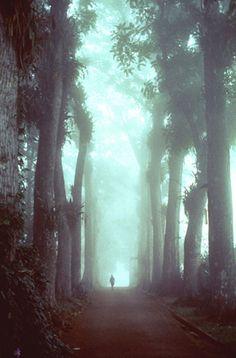 Aburi Garden  in an early lifting fog