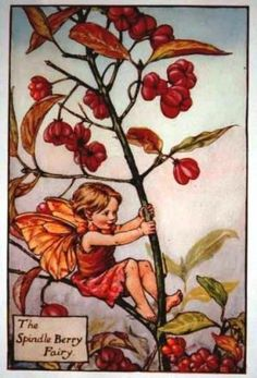 spindle-berry-flower-fairy-print-cicely-mary-barker