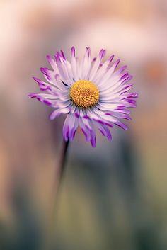 ~~Daisy by mikroman6~~