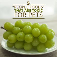 Which people food can my pet eat? Certain foods are fine in moderation, while others are never a good idea for pets. #pets #healthypets