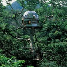 O2 Sustainability treehouses.  Looks like I live in and grow my food here!