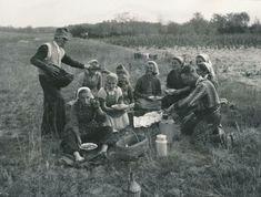 A gazda kenyeret ad az ebédelő szőlőszedőknek. 1957.