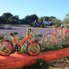 Relais Etape du TDF Bicycle, Vehicles, Sports, Hs Sports, Bike, Bicycle Kick, Bicycles, Car, Sport