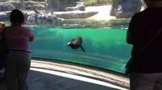Sea Lion Worried About Little Girl