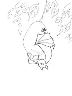 Stellaluna Hanging on Fruit coloring page from Stellaluna category. Select from 31927 printable crafts of cartoons, nature, animals, Bible and many more. Fruit Coloring Pages, Animal Coloring Pages, Colouring Pages, Daycare Crafts, Preschool Crafts, Stellaluna, Printable Crafts, Free Printables, Hanging Bat