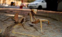 Cricket, Goregaon