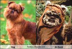 ewok vs. doggie