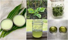 How to Make a Simple Healing Plantain Salve For Burns, Bites, Eczema & More - Harness the healing power of the plantain herb in this easy to make salve. It's perfect for minor cuts and burns and a great addition to your first aid kit. Healing Herbs, Medicinal Plants, Natural Healing, Holistic Healing, Eczema Remedies, Herbal Remedies, Health Remedies, Natural Medicine, Herbal Medicine