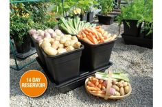 Grow 4 varieties of veg all year round, in our self-watering vegetable planter, with 4 deep pots perfect for growing root veg & potatoes. Its' watering system delivers the right amount of water & nutrients to your veg, so no more rotten veg. Vegetable Planters, Garden Planters, Growing Seeds, Growing Plants, Root Vegetables, Growing Vegetables, Large Pots, Self Watering, Plant Growth